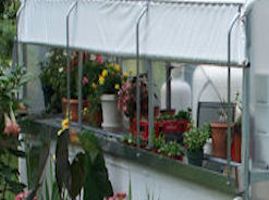Optional Roll Up Curtain for Polyfilm Greenhouse