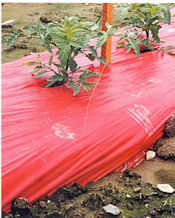 Red Plastic Garden Mulch